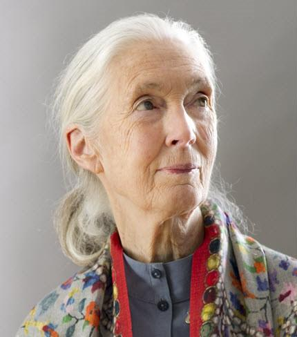 Image of Jane Goodall / Photo from United Nations Flickr, used under CC 2.0