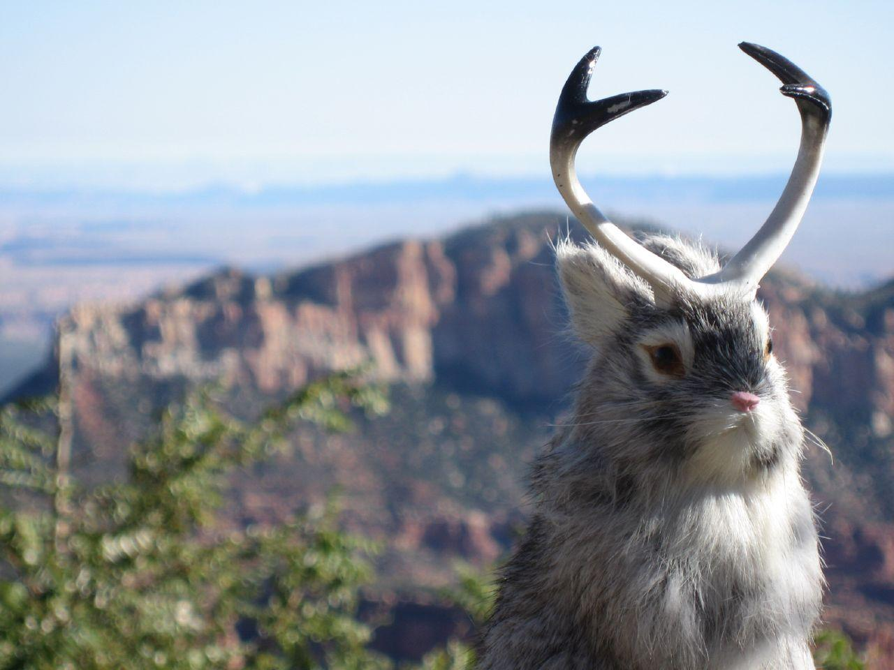 Image of Jackalope, Grand Canyon North Rim, Oct 07 by Mark Freeman on Flickr